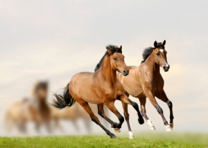 pferdehaftpflicht
