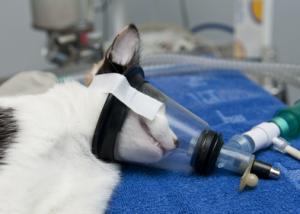 OP-Versicherung für Hunde und Katzen